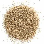 Mustard Seed Yellow - Whole